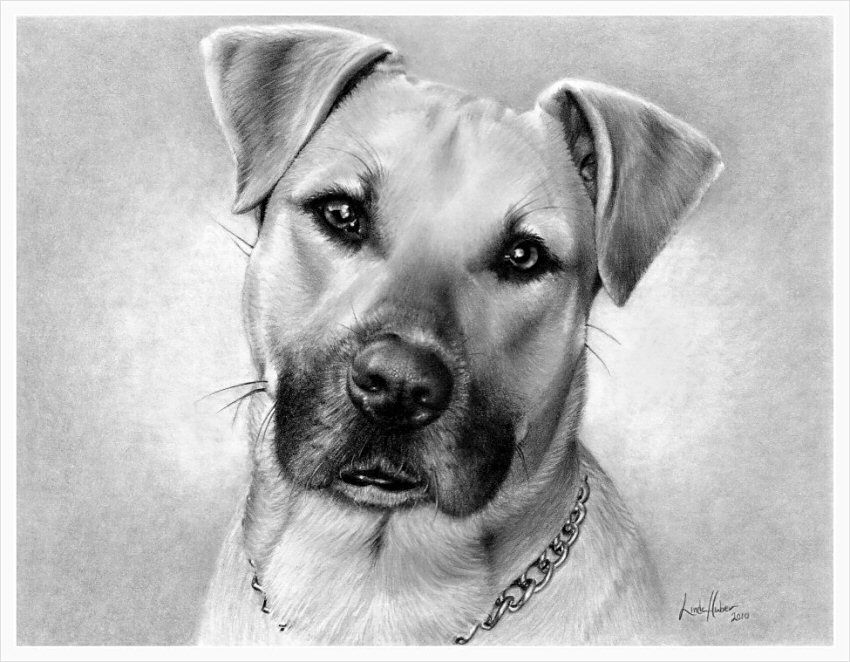 Dog Sketches For Sale